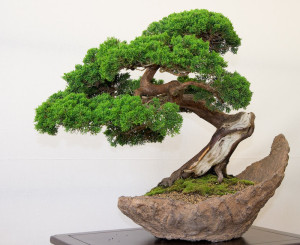 come-curare-un-bonsai1